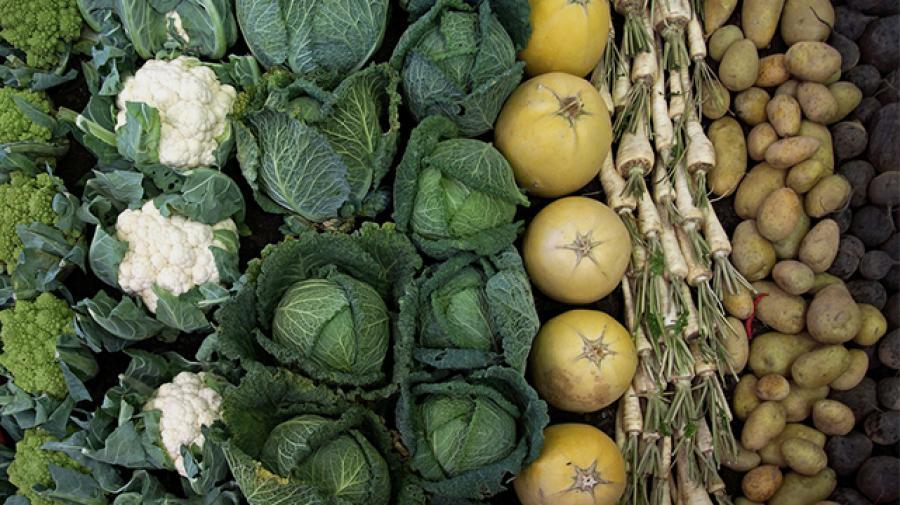 rodfrugter og kål