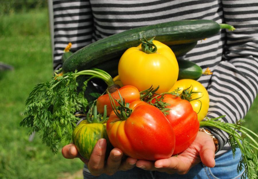 Billede af person, der har favnen fuld af tomater og agurker